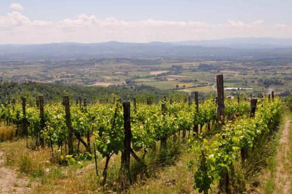 buccia nera winery 2013 5 of 202